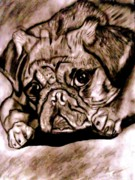 Mutt Drawings - Pugly by Herbert Renard