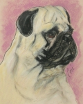 Toy Breed Prints - Pugnacious Print by Cori Solomon
