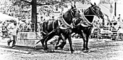 Belchertown Fair Framed Prints - Pulling 9000 Pounds Framed Print by Mike Martin