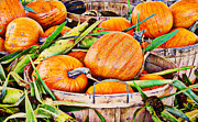 Farm Stand Prints - Pumpkin and Corn Combo Print by Ms Judi