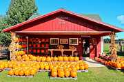 Farm Stand Prints - Pumpkin Barn Print by Rachel Cohen