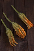 Raw Photos - Pumpkin Blossoms by Joana Kruse