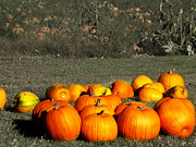 Jack-o-lanterns Photos - Pumpkin Farm by Ms Judi