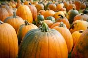 Festival Photos - Pumpkin Fest by Greg Fortier