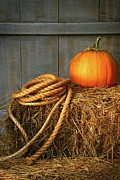 Rope Framed Prints - Pumpkin on a bale of hay Framed Print by Sandra Cunningham