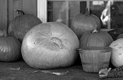 Pumpkin Digital Art Acrylic Prints - Pumpkin Party BW Acrylic Print by Suzanne Gaff