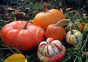 Autumn Prints Prints - Pumpkin Patch Print by Kathy Yates