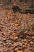 Vivid Fall Colors Art - Pumpkin Trail by Susan Herber