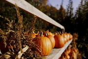 Farm Stand Prints - Pumpkins Aglow Print by Christine Tuck
