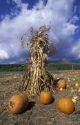 Corn Stalks Art - Pumpkins And Corn Stalks Bundle by Rich Reid