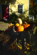Hunterdon County Posters - Pumpkins in a Wheelbarrow Poster by George Oze