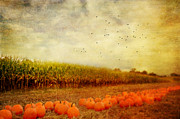 Corn Stalks Posters - Pumpkins In The Corn Field Poster by Kathy Jennings