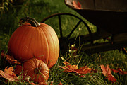 Outdoor Still Life Photos - Pumpkins in the grass by Sandra Cunningham
