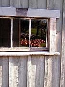 Peter J Robinson Jr - Pumpkins in the Window