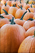 Harvest Art Prints - Pumpkins Print by Kim Fearheiley