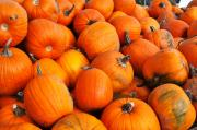 Orange Pumpkins Prints - Pumpkins Print by Louise Heusinkveld