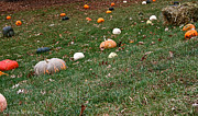 Haybale Photo Prints - Pumpkins Print by Susan Herber
