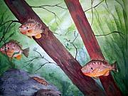 Fish Underwater Paintings - Pumpkinseed Sunfish by Audrey Bunchkowski