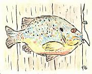 Matt Gaudian - Pumpkinseed Sunfish