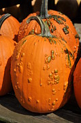 Pumpkin Patch Photos - Pumpkinville by Luke Moore