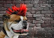 Dog Portraits Posters - Punk Bully Poster by Christine Till