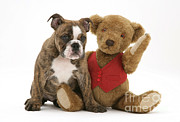 Brindle Metal Prints - Pup And Teddy Bear Metal Print by Jane Burton