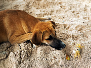 Latin America Photos - Pup and the Crab by John Rizzuto