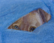Fear Pastels Posters - Pup In A Blanket Poster by  David Willingham