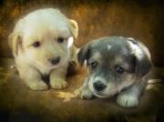 Dogs Digital Art - Puppies by Svetlana Sewell