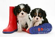 Puppies With Rain Boats Print by Jane Burton