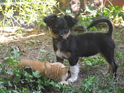 Puppy Photo Originals - Puppy and Kitten Friends by Meghann Porter