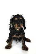 Cute Dog Photos - Puppy bathtime by Jane Rix