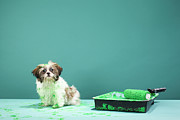 Dog Paw Prints - Puppy Covered In Green Paint From Paint Tray Print by Martin Poole