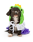 Adorable Prints - Puppy Frog Prince Print by Susan  Schmitz