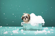 Sud Prints - Puppy In Foam Bath Print by Martin Poole