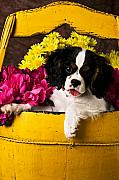 Daisies Posters - Puppy in yellow bucket  Poster by Garry Gay