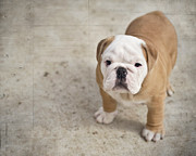 Puppy Metal Prints - Puppy Metal Print by Jody Trappe Photography