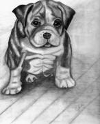 Boxer Drawings - Puppy by Judy Moses