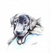 Labrador Mixed Media Framed Prints - Puppy Framed Print by Morgan Fitzsimons