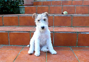 Fox Terrier Posters - Puppy Of Fox Terrier Poster by Paula Sierra
