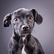 Perros Photos - Puppy on Gray by Michael Kloth