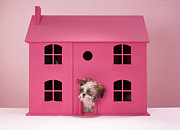 Home Ownership Posters - Puppy Peering Out Of Dolls House Poster by Martin Poole
