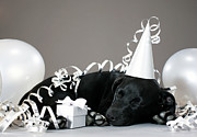 Party Hat Posters - Puppy Sleeping In Party Decorations Poster by Martin Poole