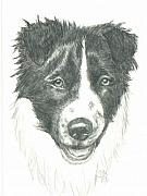 Border Drawings - Puppy Tuff by Sue Ann Thornton
