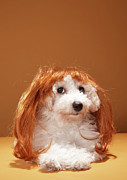 Pampered Prints - Puppy Wearing Ginger Wig Print by Martin Poole