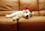 Dog Lying Down Prints - Puppy Wears A Christmas Hat, Lounges On Sofa Print by Karina Santos