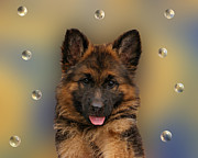 Shepherds Digital Art Posters - Puppy with Bubbles Poster by Sandy Keeton
