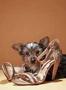 Pampered Prints - Puppy With Damaged Shoe Print by Martin Poole