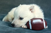 Sleeping Dogs Digital Art Prints - Puppy With Football Print by Tyra  OBryant