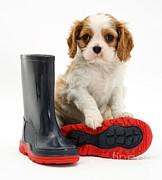 Puppy With Rain Boots Print by Jane Burton